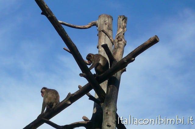 Bioparco di Roma villaggio degli scimpanzè