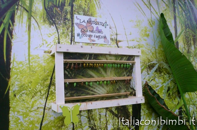 Bioparco di Roma farfalle