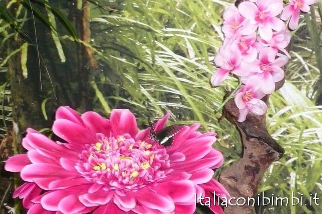 Bioparco di Roma fiori e farfalle