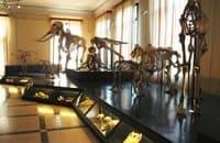 Museo Civico di Zoologia di Roma
