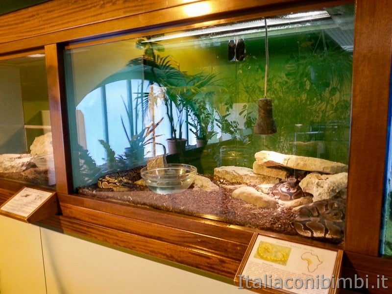 Trieste - acquario - serpenti