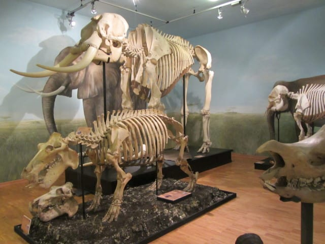 museo storia naturale12