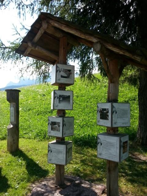 sentiero del latte a Sesto in Val Pusteria con bambini