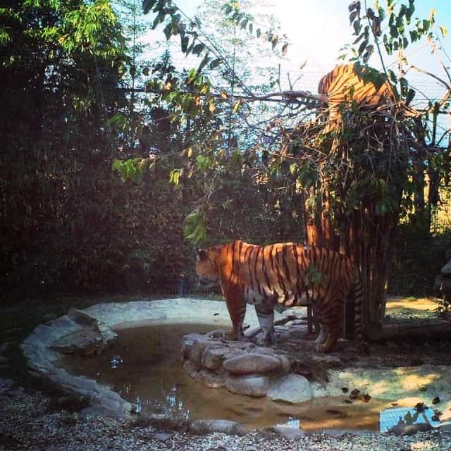 Marche con i bambini: Parco Zoo di Falconara