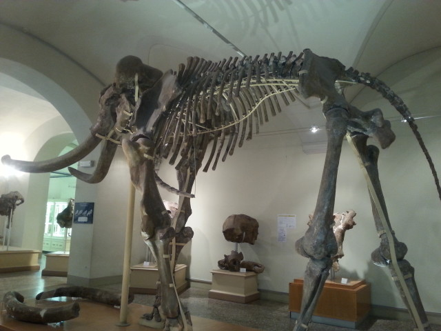 Museo di paleontologia di Firenze