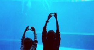 Fotografando i delfini all'Acquario di Genova