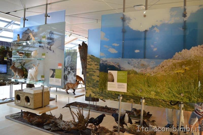Muse di Trento sezione dedicata alla montagna