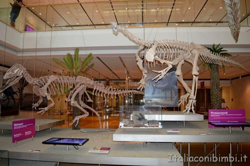 scheletri di dinosauri al Muse