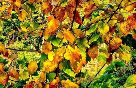 Le feste d autunno nelle Marche 2017  castagne 9a673c3eb855