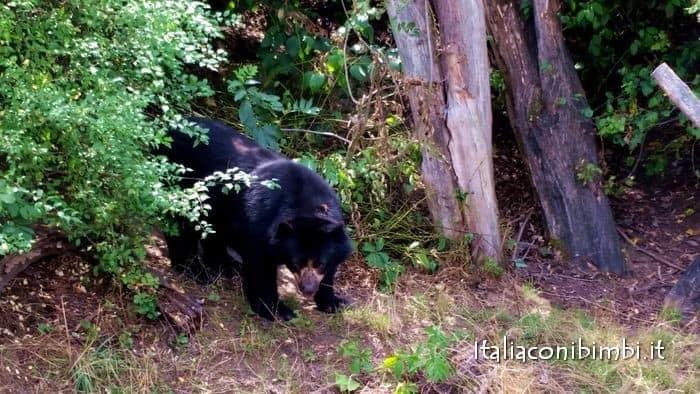 zoo di Vienna orso