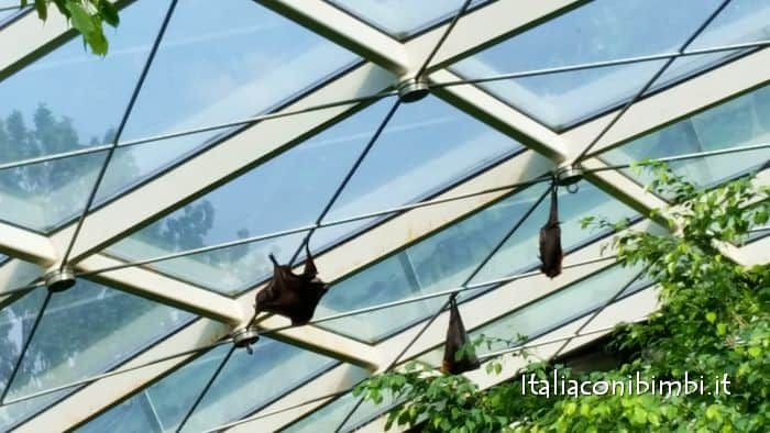pipistrelli allo zoo di vienna