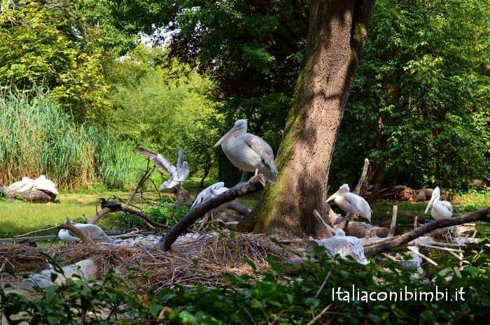 pellicani allo zoo di Vienna