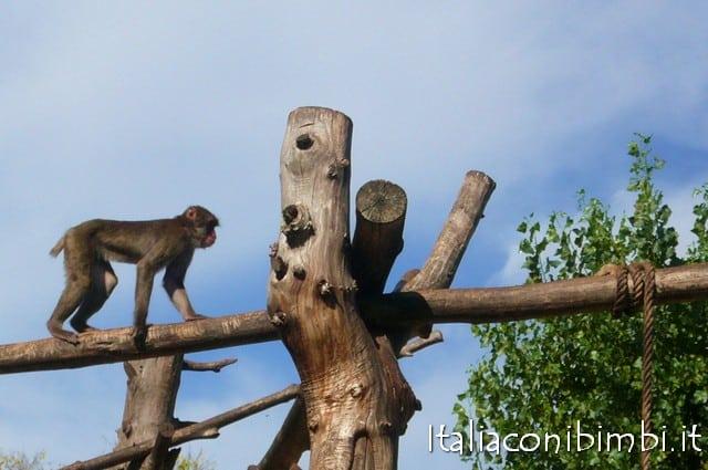 Scimmie al Bioparco di Roma