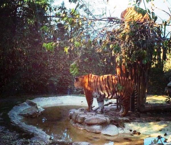 Marche con bambini: Parco Zoo di Falconara