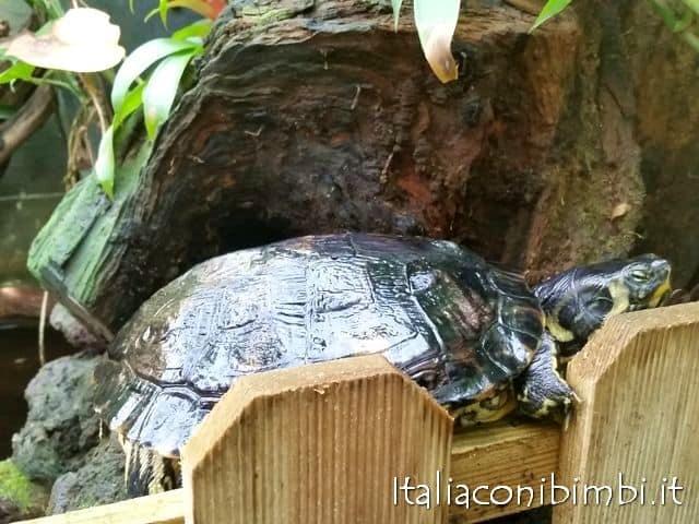 tartaruga-alla-butterfly-house-del-giardino-garzoni-di-collodi
