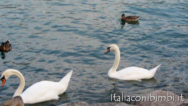 Gita in motonave sul lago d'Iseo
