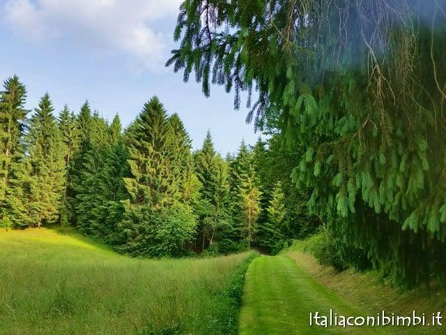 villaggio degli gnomi bosco