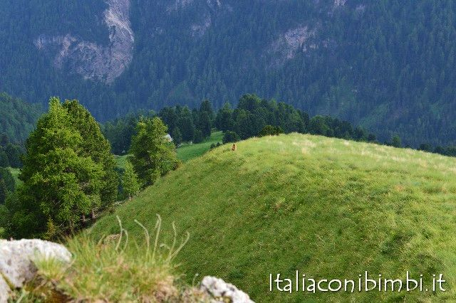 Marmotte in Val di Fassa