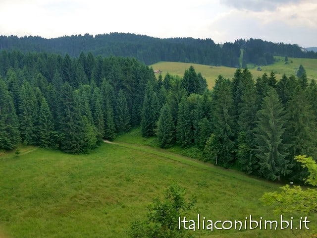 Bosco di Asiago