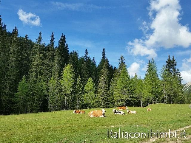 Malga Ra Stua mucche