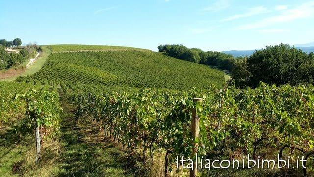 via-amerina-vigne