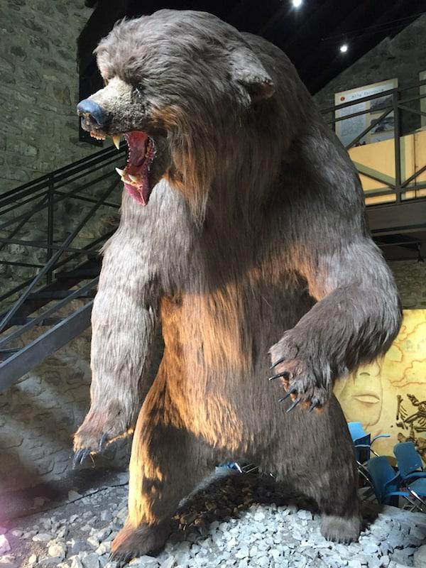 orso preistorico della Tecchia