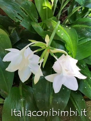 Fiori bianchi alla Butterfly House di Collodi