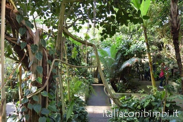 butterfly-house-collodi