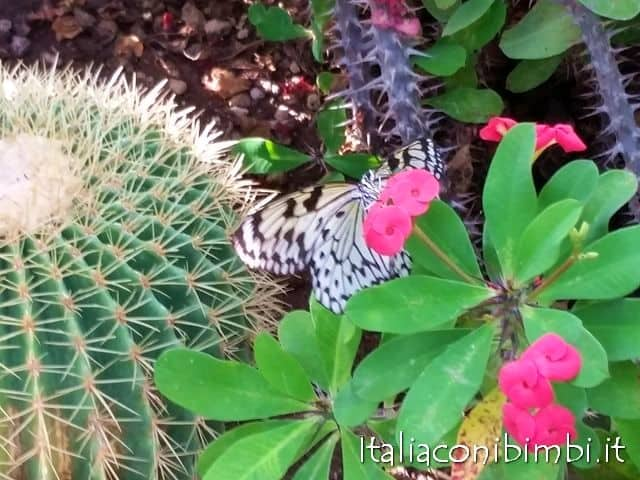 Giardino Garzoni e Butterfly House