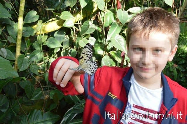 farfalla-sulle-mani-alla-butterfly-house-collodi