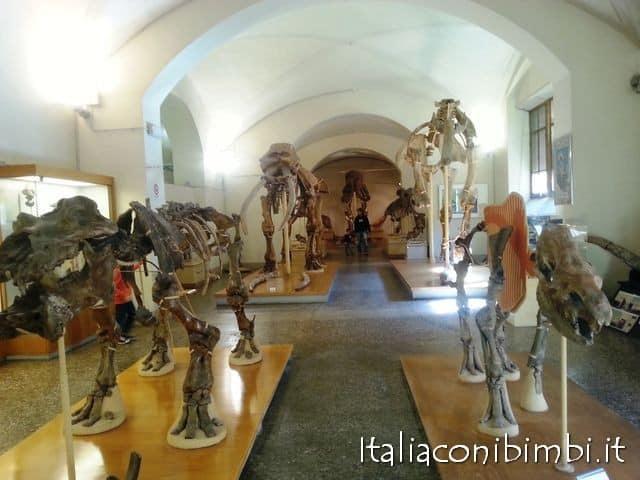 museo-di-paleontologia-di-firenze