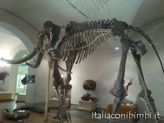 museo-di-paleontologia di Firenze