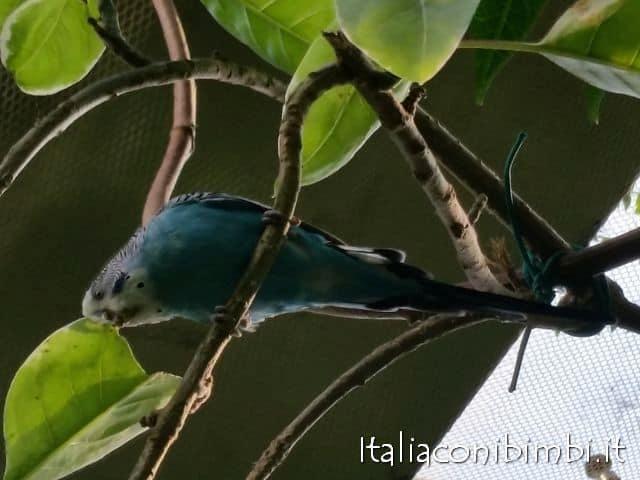 pappagallo-alla-butterfly-house-del-giardino-garzoni-di-collodi