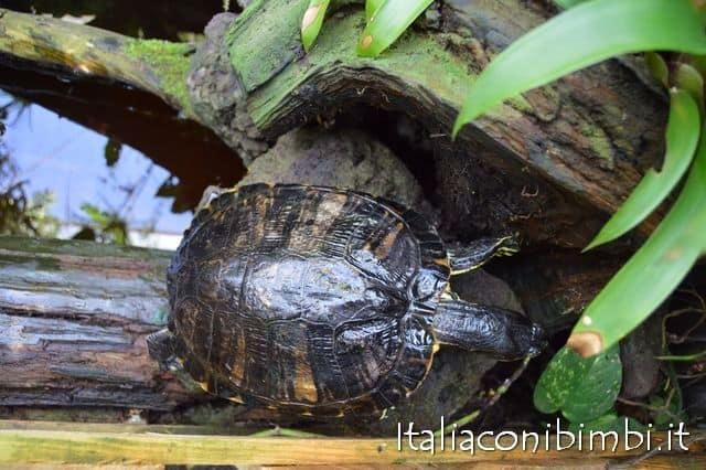 tartaruga-butterfly-house-collodi