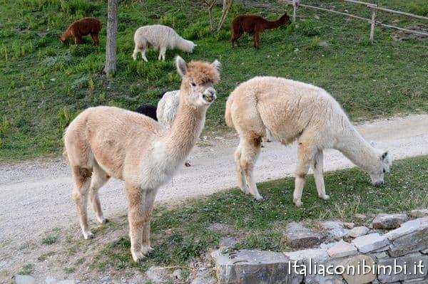 Umbria con bambini -Agriturismo Maridiana