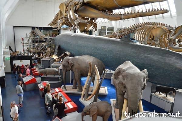 balena e elefanti al museo della scienza di Londra