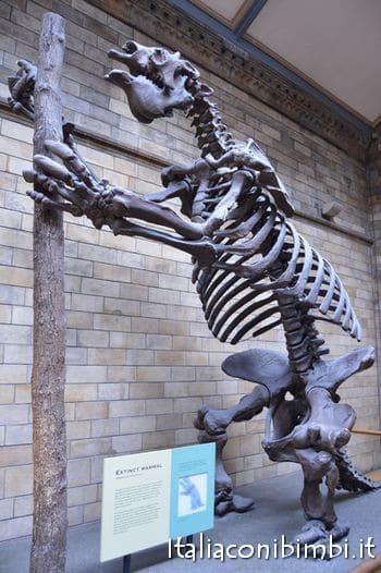 dinosauro al museo di storia naturale di Londra