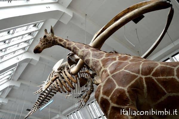 giraffe al museo della scienza di Londra