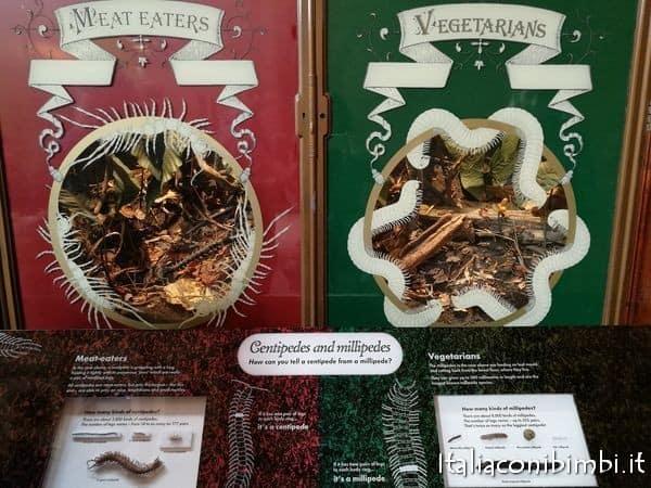 insetti al museo di storia naturale di Londra