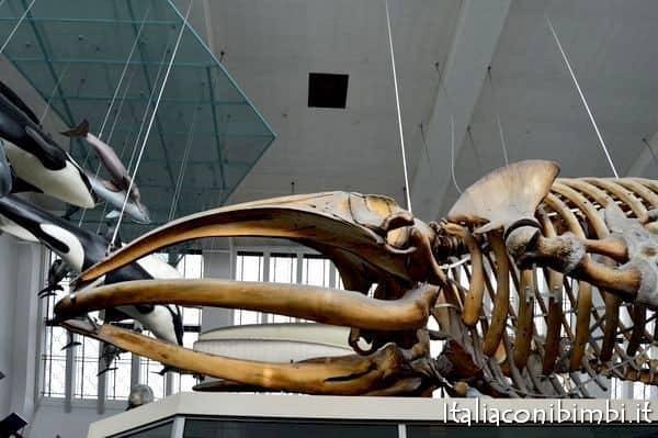 scheletri al museo della scienza di Londra