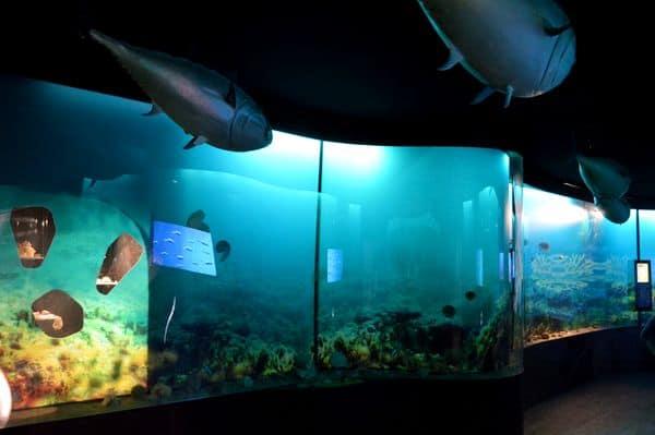 Mostra del mare a città della scienza Napoli
