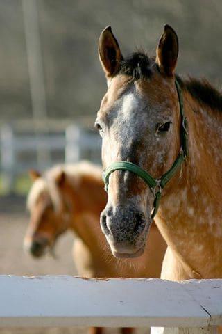cavalli all'agriturismo Ca de Figo