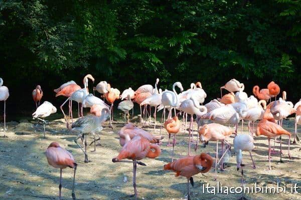 fenicotteri rosa allo zoo di Monaco