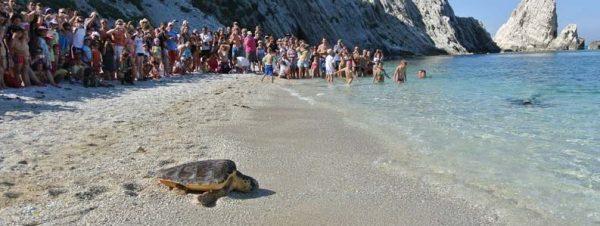 rilascio tartaruga dalla spiaggia delle Due Sorelle