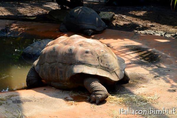 tartaruga allo zoo di Monaco