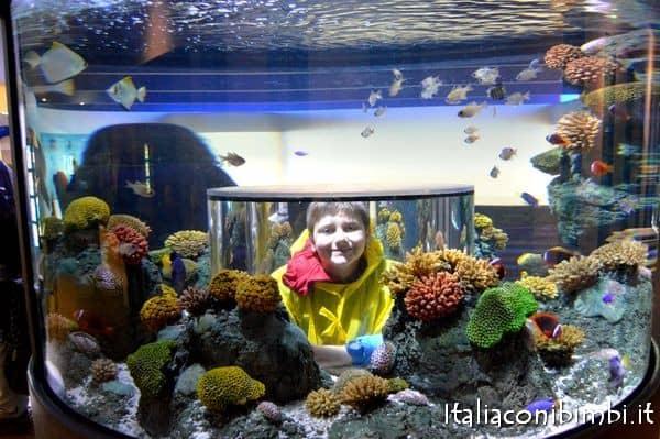 Atlantis by Sealife a Legoland Billund