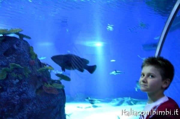 acquario di Copenaghen Den Blaa Planet