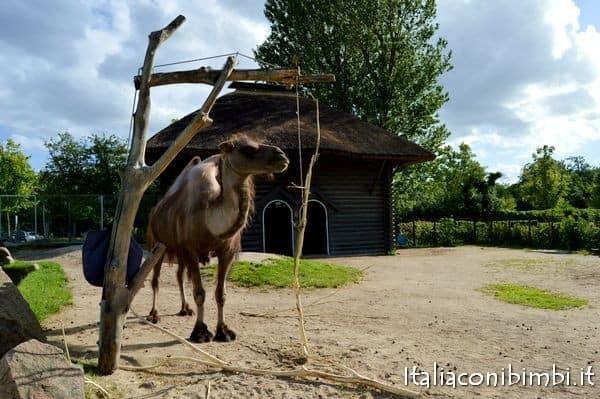 cammello zoo di Copenaghen