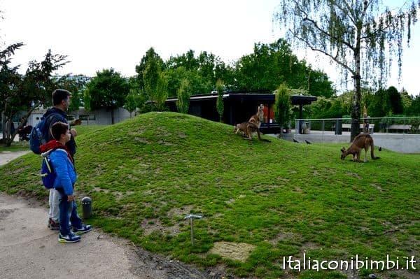 canguri allo zoo di Copenaghen
