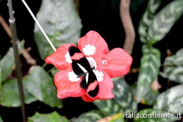 farfalla nella serra tropicale dello zoo di Copenaghen